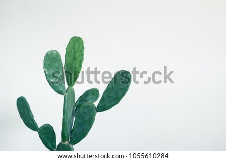 Green cactus on white wall background