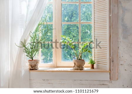 Green cactus, succulents on the windowsill with light soft background. Spring or summer greeting card. Home plants on the windowsill - Shutterstock ID 1101121679