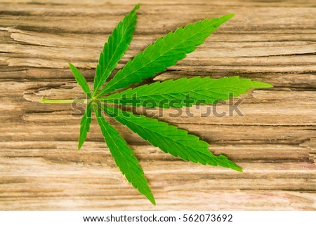 Green cannabis leaf on a wooden surface. #562073692