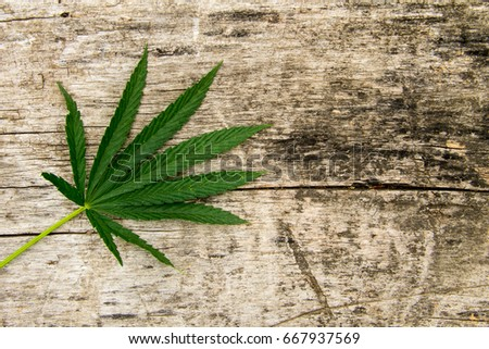 Green cannabis leaf on rustic wooden background #667937569