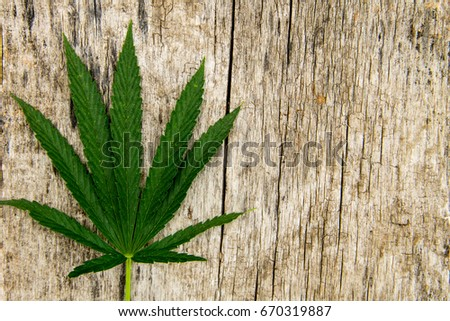 Green cannabis leaf on wooden background #670319887