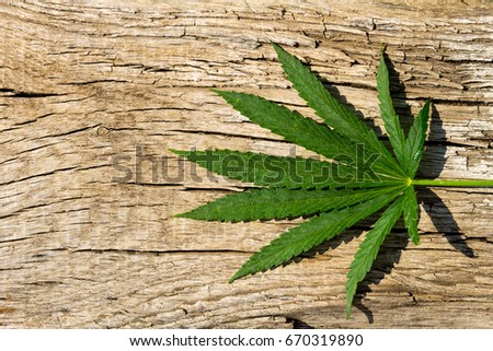 Green cannabis leaf on wooden background #670319890