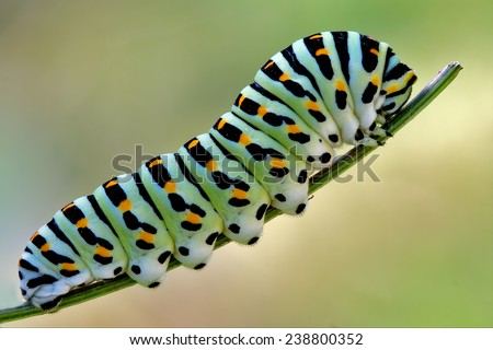 Stock Photo green caterpillar on a fennel