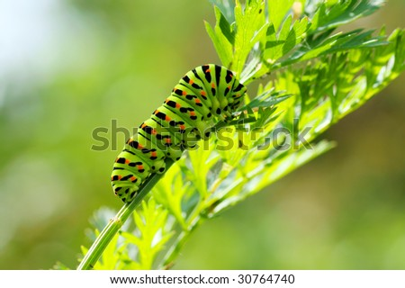 Green caterpillar on natural background