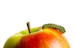 Green caterpillar on red apple.