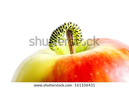 Green caterpillar on red apple. #161106431