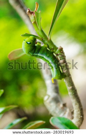 Green Caterpillar on tree branch #283019693