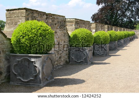 Green circular hedging shrubs in square metal, containers in a line on a path, with old stone walling to the rear. - stock photo