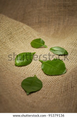 Green citrus leaves on burlap background