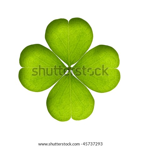 green clover isolated on white