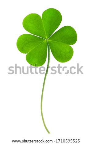 Green clover leaf isolated on white background. This has clipping path. Foto d'archivio ©