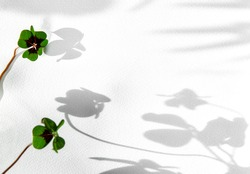Green clover leaves on white watercolor paper background. Selective focus