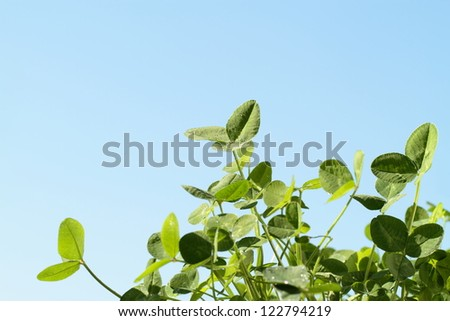 Green clover of the blue sky background
