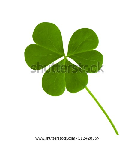 green clover symbol of a St Patrick day isolated on white background