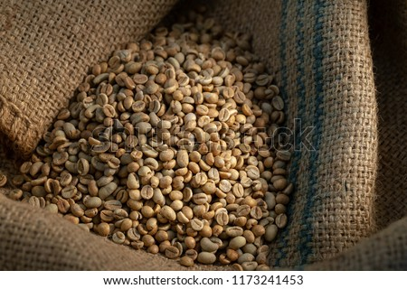 Green coffee bean raw in sack with scoop.