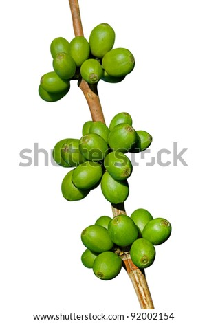 Green coffee beans isolated on white