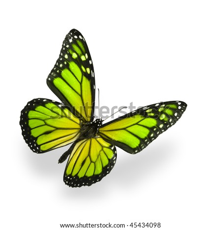 Green color enhanced butterfly Isolated on White. Soft shadow underneath. - stock photo