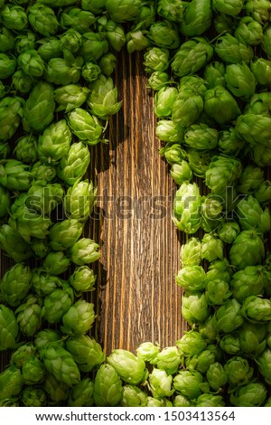 Green cones of hops on a rustic aged wooden table with copy space. Brewery concept background. Hop cones formed as a shape of beer bottle.