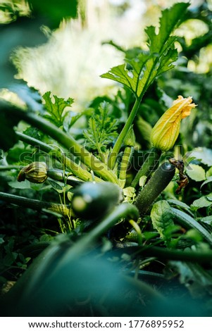 Green coquette and yellow flower