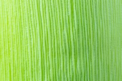 Green Corn leaf close up. Nature background