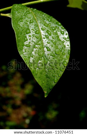 Green covered by drops of dew