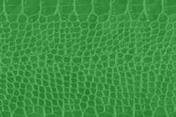Green crocodile skin texture, snake as background. Scale texture.