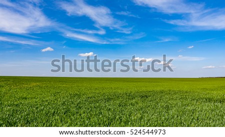 green crop meadow under nice sky with clouds #524544973