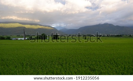 Green Crops underneath Colorful Cloud in Chishang (彩雲下的池上稻田) ストックフォト ©