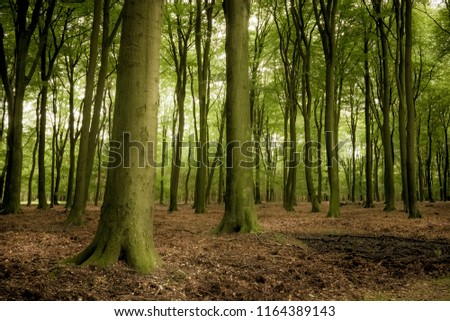 Green deciduous forest #1164389143