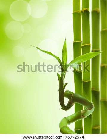 green decorative bamboo on a white backround - stock photo