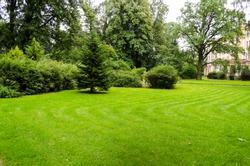 Green decorative garden. Neutral landscape with a green field. Landscape park.