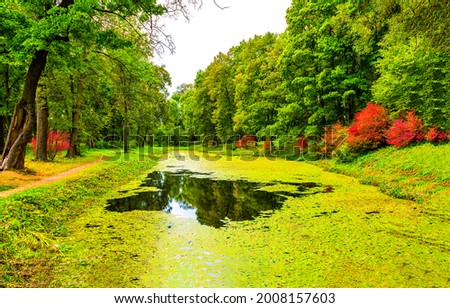 Green duckweed of the river in the autumn park. Autumn duckweed river. Duckweed river in autumn fall