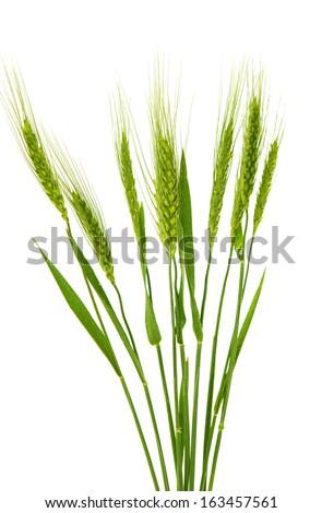 free wheat plant leaf 16373 stock photo avopix com