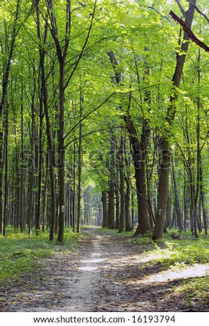 Green enchanted forest path