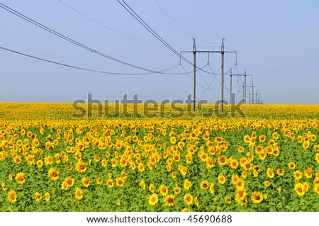 Green energy: sunflowers field and high tension power towers