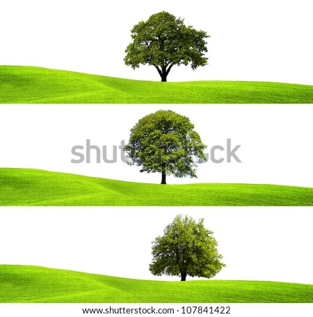 Green environment and tree - stock photo