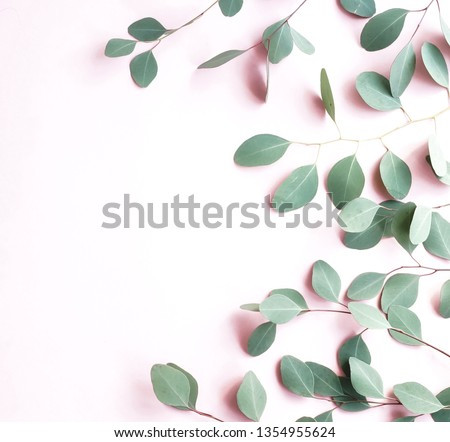 green eucalyptus branches herbs, leaves,  plants frame border on pale pink  background top view. copy space. flat lay #1354955624