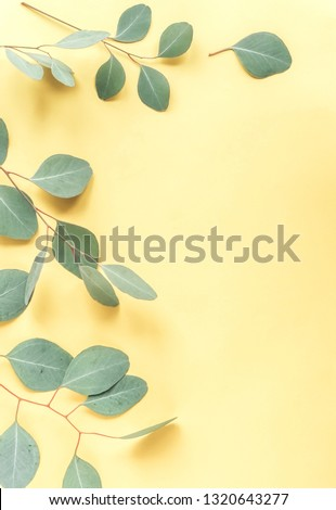 green eucalyptus leaves, branches, herbs,  plants on pale pastel yellow background top view. copy space. flat lay #1320643277