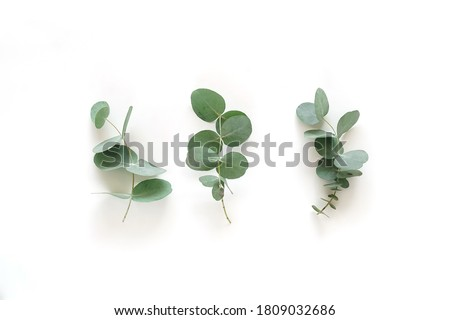 green eucalyptus leaves, branches top view isolated on white background. flat lay, top view. poster Stock fotó ©
