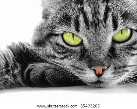 green-eyed cat #35493205