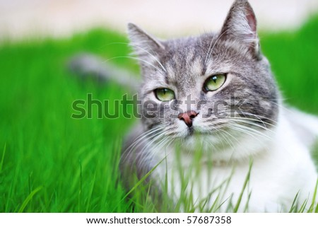 Green-eyed Cat in full growth on a background of a grass