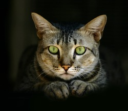 green-eyed cat in hideout with dark background.