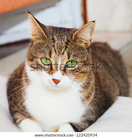 Green eyed cat sitting on a pillow