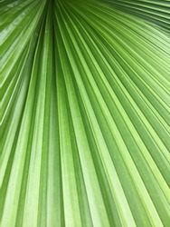 green fan leaf zoom in, close up natural texture pattern wallpaper