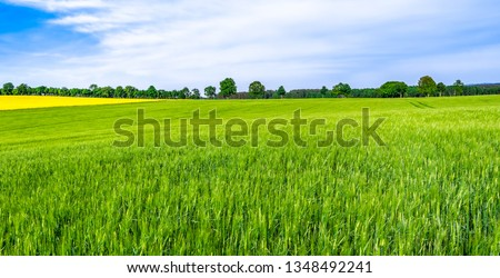 Green farm, panoramic view of farmland, crop of wheat on field, spring landscape #1348492241
