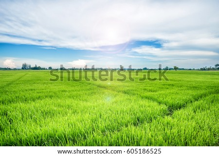 Green Farm with sun flare