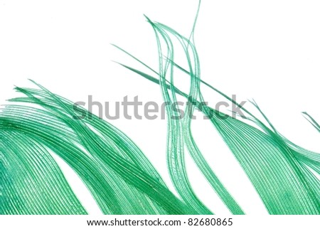 green feather abstract texture background isolated on white