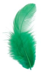 Green feather isolated on white background cutout