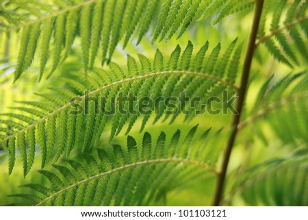Green fern close-up
