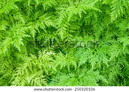 green fern growing in forest texture background